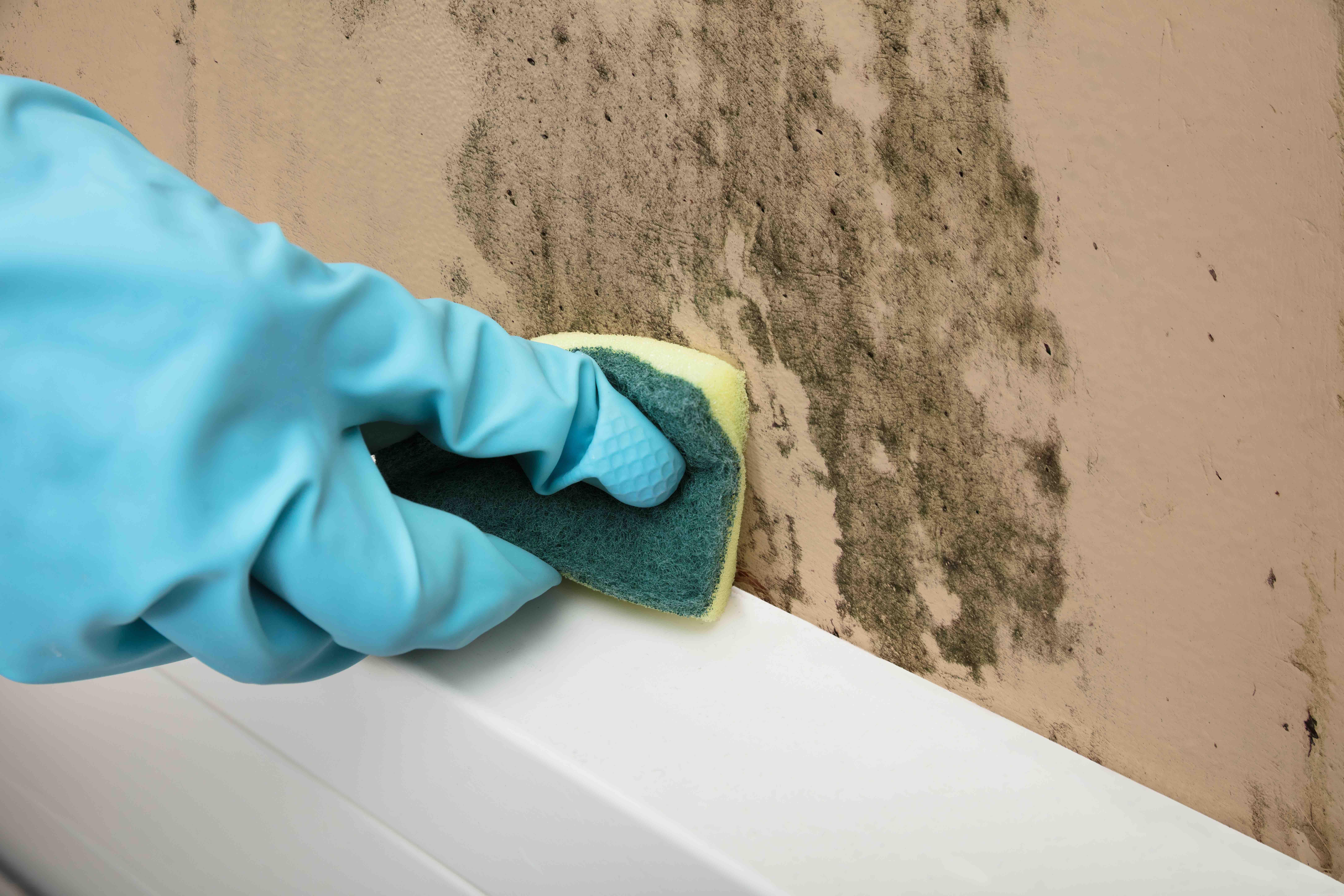 押入れのカビの掃除方法と予防方法を壁の素材ごとに全部紹介 決定版