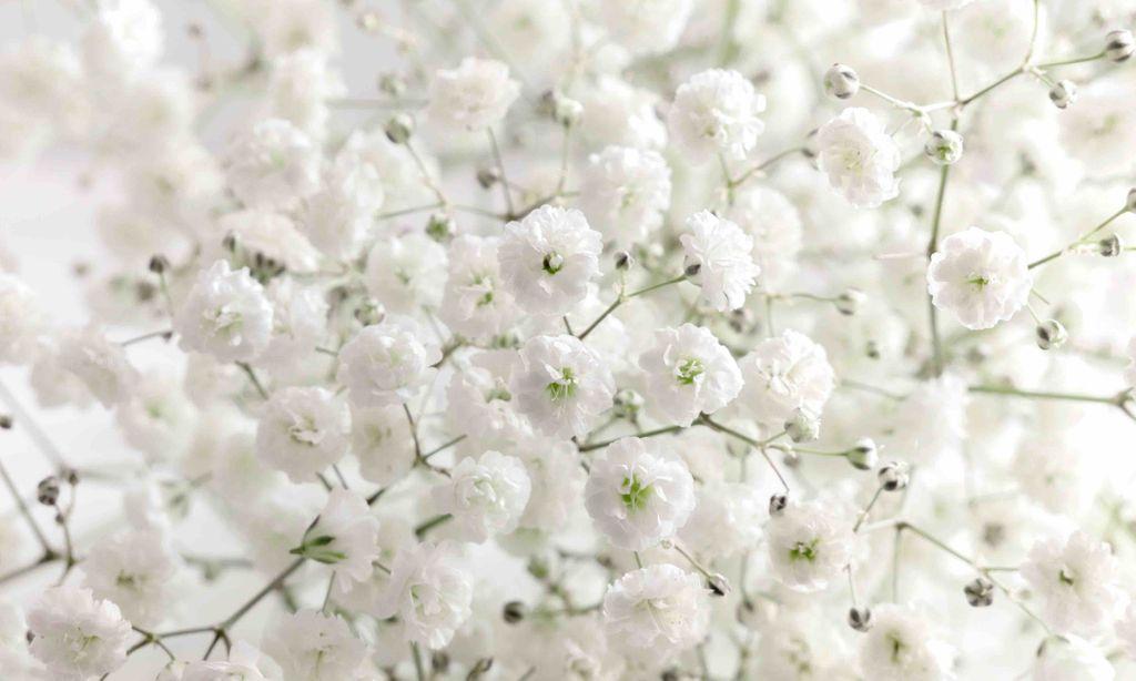 墓参り 花 選び方 Zehitomo