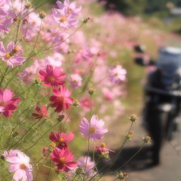キヨさんが投稿したバイクライフ