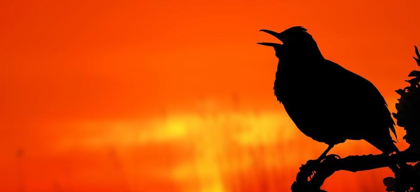 bird_2037129_1920