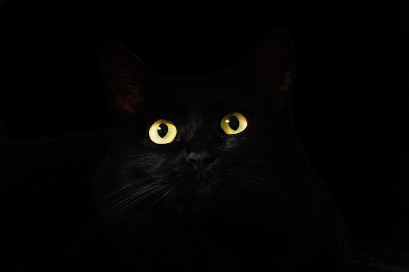 cat_eyes_2944820_1920