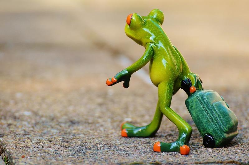 frog_897419_1920