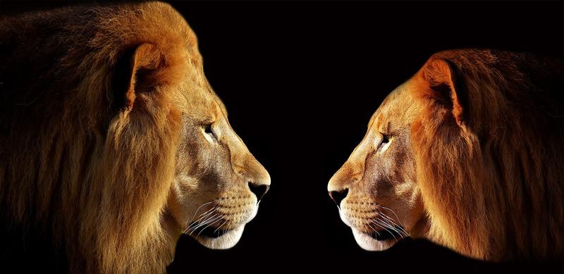 lion_3057316_1920