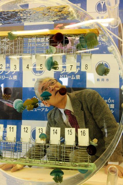 抽選用の水槽内を泳ぐクラゲを見つめる村上龍男館長=鶴岡市役所