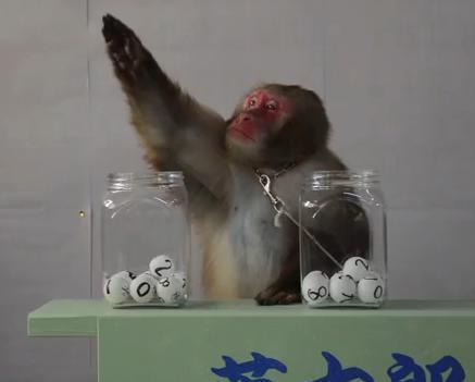 サルの英太郎は点数まで当てちゃいます(日光猿軍団)