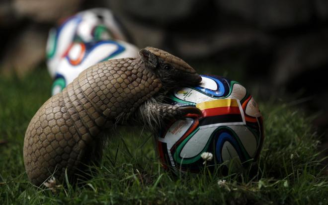 ドイツの旗が貼られたサッカーボールに近づくアルマジロのNorman=ロイター