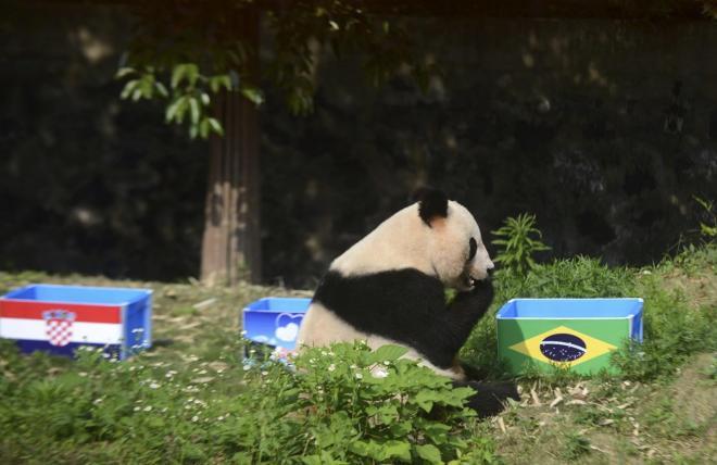 ブラジルの旗が貼られたエサ箱の隣に座るジャイアント・パンダのYing Mei=ロイター