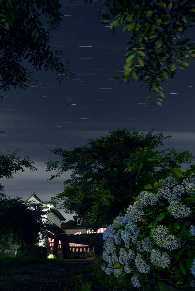 福岡城址とアジサイ=東山正宜撮影