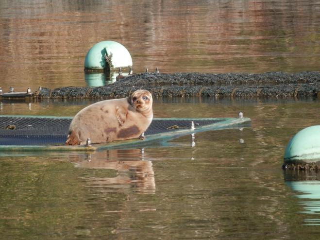 鳥取市の湖山池の「住民」になったコヤちゃん=湖山池情報プラザ提供