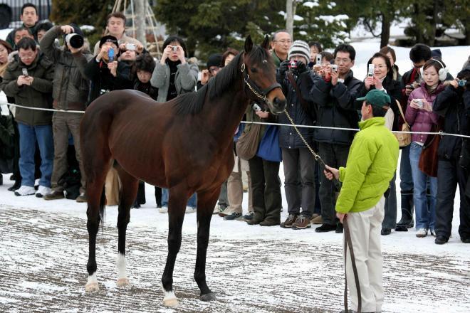種牡馬として51億円の価格となったディープインパクト=2007年2月14日