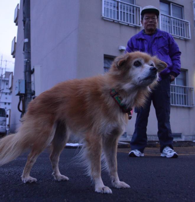仮設住宅から逃げ出し、約10キロ離れた自宅跡近くで見つかった「べる」と飼い主の佐藤嶺一さん=2012年1月13日、仙台市若林区の仮設住宅前