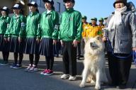 鰺ケ沢町の特別観光大使を務める人気の秋田犬「わさお」