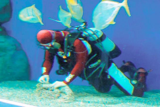 水族館の水槽の中で、なぜかサンゴを植える。ガチャピンばりにオファーを拒まない=2007年11月28日