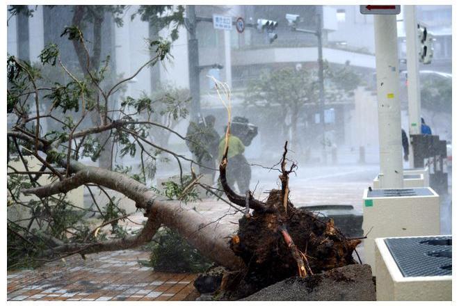 那覇市では強風で街路樹が倒れた=8日午前11時2分