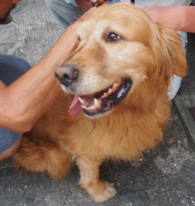 保見被告の愛犬だったオリーブ