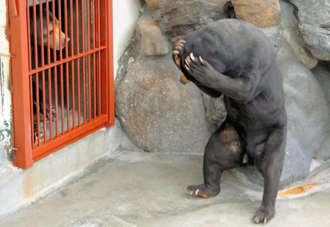 周南市にある徳山動物園のマレーグマの「ツヨシ」。頭を抱えるしぐさが話題に
