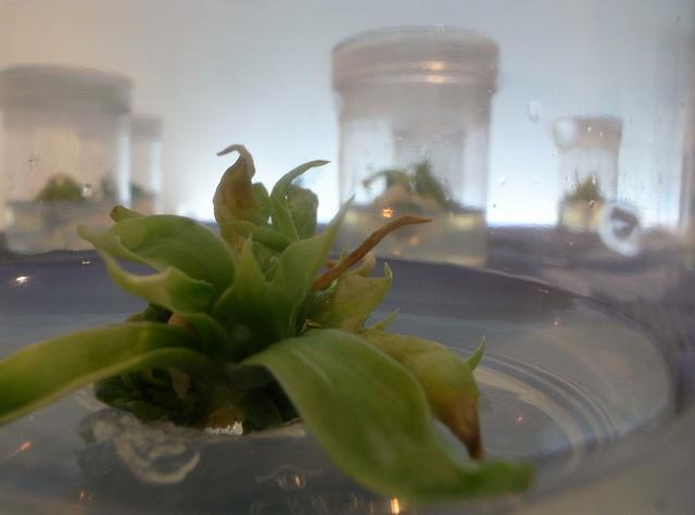 培養した植物細胞