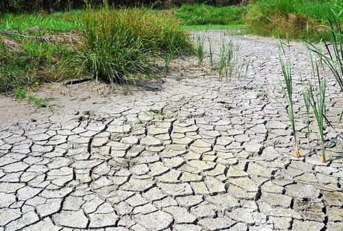 水不足と猛暑で干上がった四万十川河川敷のトンボ誘致池=四万十市中村四万十町