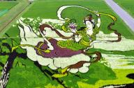 見ごろを迎えた田んぼアート「羽衣伝説」=青森県田舎館村、日吉健吾撮影