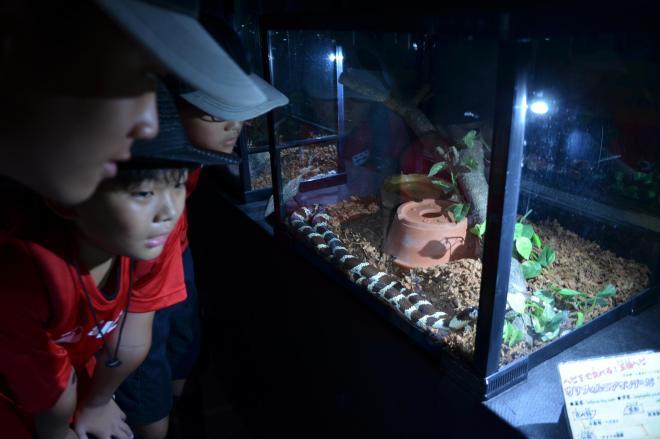 ヘビを眺める子どもたち=山口県周南市の徳山動物園