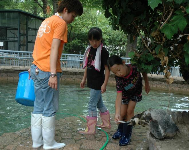 ペンギンにエサをやる児童ら=2011年7月29日、江戸川区北葛西3丁目の自然動物園