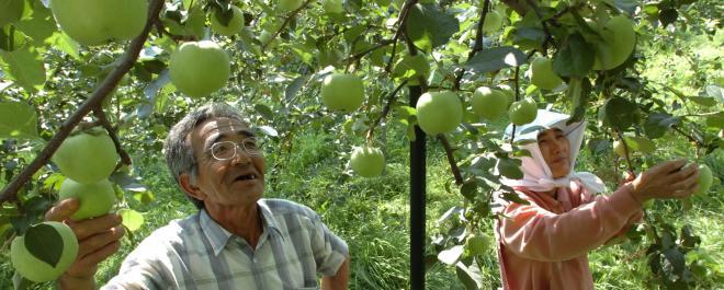 無農薬りんごの栽培を7年越しで成功させた木村秋則さん=2005年8月29日、青森県中津軽郡で