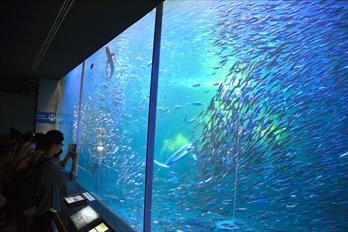 リニューアルされた大水槽。青く光るイワシの群れが見ものだ=2014年10月3日、美浜町奥田の南知多ビーチランド