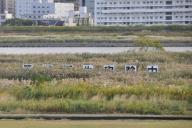 大阪・淀川沿いにある巨大看板。これは一体?=野上英文撮影
