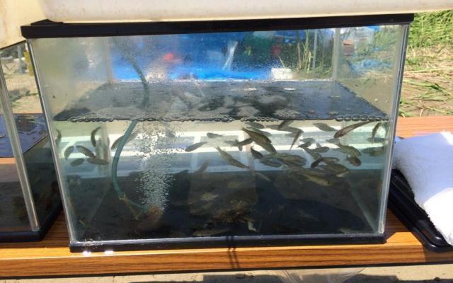 魚や貝などたくさん採れました