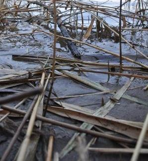 柴島干潟(くにじまひがた)。淀川河川事務所が10年前に人工的に干潟を作りました