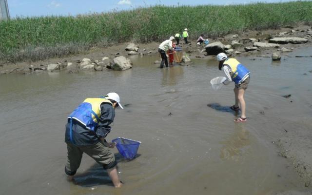 柴島干潟でシジミ採り