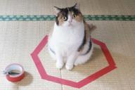 これが話題の猫転送装置=ブログ「guremike」より