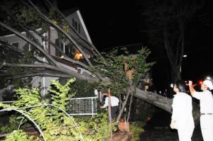 2011年9月の台風15号の被害。民家に寄りかかるケヤキ=2011年9月21日、千葉県松戸市新松戸7丁目