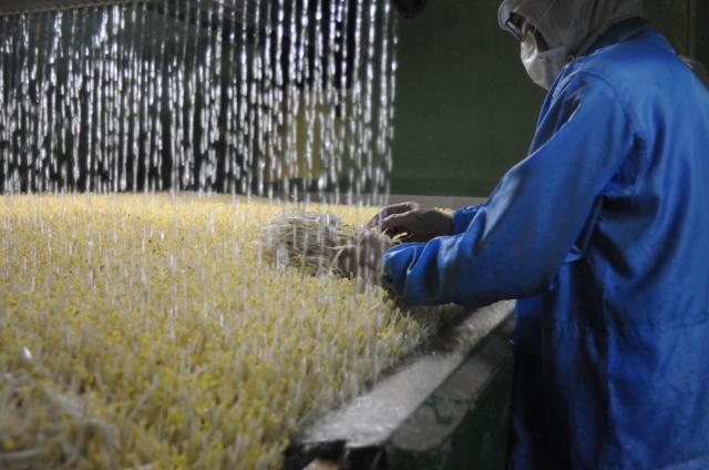 フル稼働で生産されているモヤシ=2010年5月9日の朝日新聞
