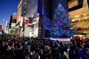 東京・銀座にお目見えした光り輝く巨大なクリスマスツリー=2014年11月15日、日吉健吾撮影