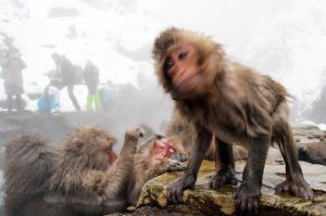 温泉からあがって体を震わせて水滴を飛ばす子ザル=2014年12月29日、長野県山ノ内町の地獄谷野猿公苑