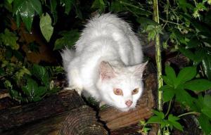 震災後に生まれたとみられる子猫。小雨の中、道の脇から様子をうかがっていた=2013年10月6日、福島県南相馬市