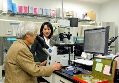 幹細胞培養室でiPS細胞から培養された網膜を顕微鏡で観察する養老孟司さん(左)と高橋政代プロジェクトリーダー=神戸市中央区、滝沢美穂子撮影