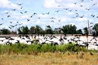 鳥の大量死、実は珍しくない?