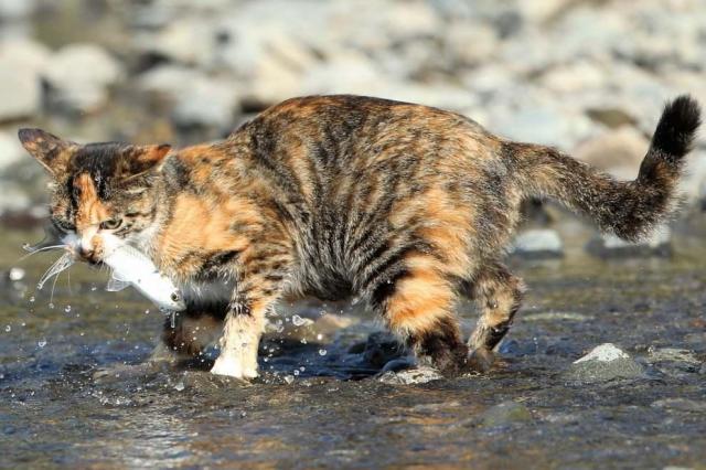 見事に魚を捕まえたネコ