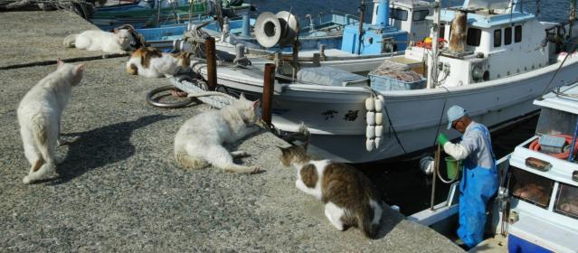 福岡市西区の玄界島で、雑魚を分け与えてくれる漁師の帰りを待つネコたち=2005年6月3日の朝日新聞