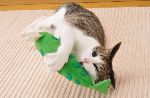 けりぐるみをかんで遊ぶネコ=Petio提供