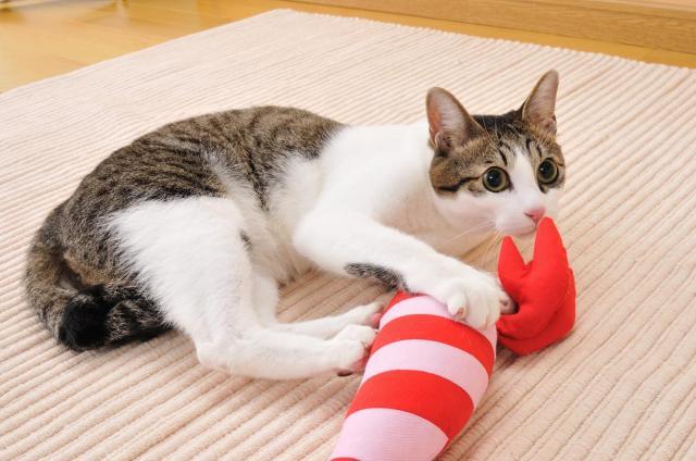 けりぐるみで遊ぶネコ=Petio提供