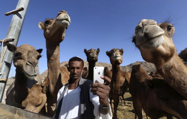 サウジアラビアのタイフの牧場で、ラクダを背景に「自撮り」する男性=2014年11月、ロイター