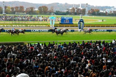 東京競馬場でレースを見守る観客=2014年11月