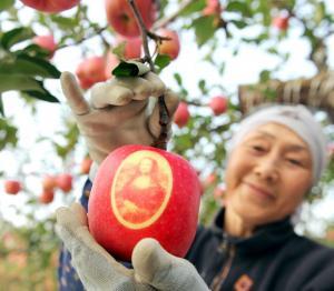 モナリザの絵が浮き上がったリンゴ=2008年10月20日、弘前市、戸村登撮影