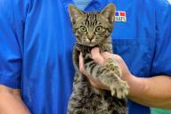川から救助され、治療を受けて元気になった子猫