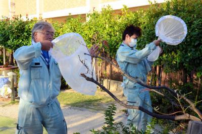 デング熱の感染源を調べるため、蚊を採集する職員たち=兵庫県西宮市