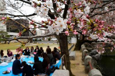 花見を楽しむ人たち=2015年3月、大分市