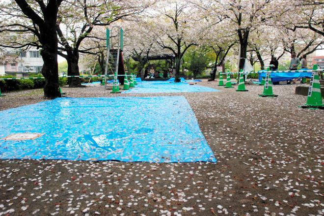 花見客の場所取り用のブルーシート=2009年4月、鹿児島市